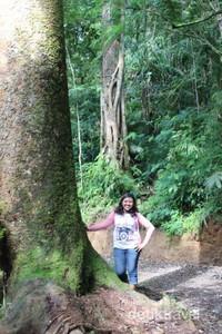 Pohon-pohon yang menghijau menjadi pemandangan yang mendominasi lokasi ini