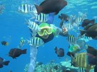 Salah satu hasil foto bawah laut Olele yang cantik