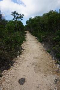 Jalan setapak menuju Tebing Kalaboe