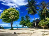 Pepohonan di Pulau Bokori