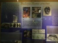 Penjelasan budaya Homo Erectus