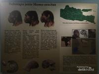 Jenis-jenis Homo Erectus