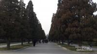 Pepohonan kuno di area Temple of Heaven, disebut juga sebagai wilayah terhijau di Beijing