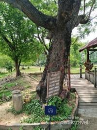 Pohon tempat menyiksa perempuan dan anak-anak