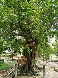 Pohon yang menjadi tempat menggantung speaker, yang dipasang lagu dengan volume sangat keras. Tujuannya untuk meredam suara jeritan korban yang disiksa