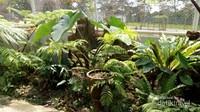 Sebagian koleksi tanaman paku yang ada di taman paku kebun raya .
