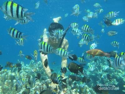 Terpesona Indahnya Alam Bawah Laut Pantai Olele di Gorontalo