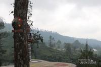 Dek kayu yang ada di atas pohon sebagai salah satu tempat berfoto, tetap berhati-hati ya