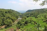 Pemandangan sawah dan pepohonan yang nampak di sekitar curug Awang.