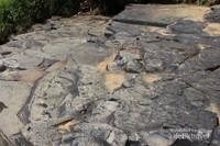 Inilah batuan yang ada di atas tebing curug , tidak licin dan cenderung rata.