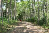 Jalan masuk menuju Curug Awang berupa tanah berbatu dengan pepohonan di kanan dan kiri.