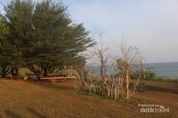 Pohon yang ada di tengah lokasi dengan bangku kayu dibawahnya , pengunjung bisa duduk-duduk sambil beristirahat dan menikmati pemandangan .
