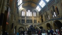 Interior National History Museum London