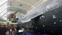 Paus biru yang menjadi salah satu pusat perhatian di museum ini