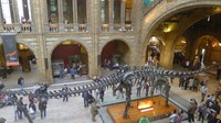 Di hall utama museum terdapat kerangka diplodocus, dinosaurus besar pemakan tumbuhan