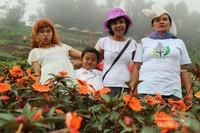 Bunga dengan latar kabut khas Gunung Slamet