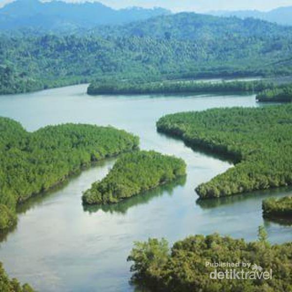 Hutan mangrove di Donggala