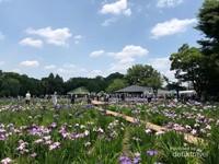 Festival bunga iris di Higashimurayama, Tokyo