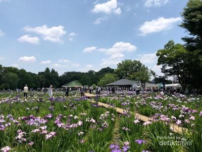 Bunga Ini Bikin Tokyo Makin Cantik