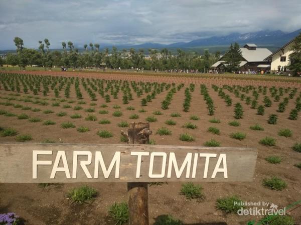 Hamparan perkebunan di Farm Tomita yang rapi dengan background beberapa pegunungan.