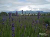 Bunga Lavender menjadi yang terkenal di farm tomita, dan produk turunannya berupa teh, Es krim, Kosmetik, Bunga kering dan lainnya dijual di Toko Souvenir  Kafe.