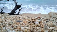 Spot pantai di Pulau Labengki Kecil