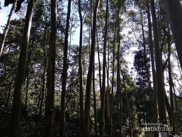 Pepohonan nan rindang di Situ Cisanti