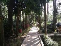 Jalan menuju ke Situ Cisanti