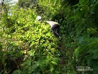 Trekking naik turun bukit di jalan setapak yang tertutupi rimbunnya dedaunan.
