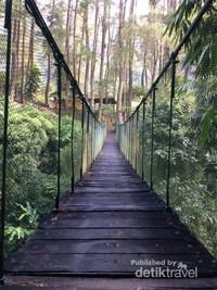 Memasuki hutan yang asri