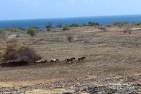 Savana Puru Kambera yang memiliki daya tarik dengan kuda liar sumba di alam bebas. Dikelilingi oleh hamparan pantai yang luas dengan pasir putih yang halus.