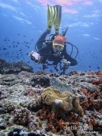 Dive Spot :Pulau Hatta,Pulau ini adalah sekitar 25 km di laut dari Banda Neira.