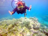 menyelam di Wakatobi/dok.pribadi