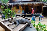 Suasana di depan rumah tinggal di Kampung Gajeboh