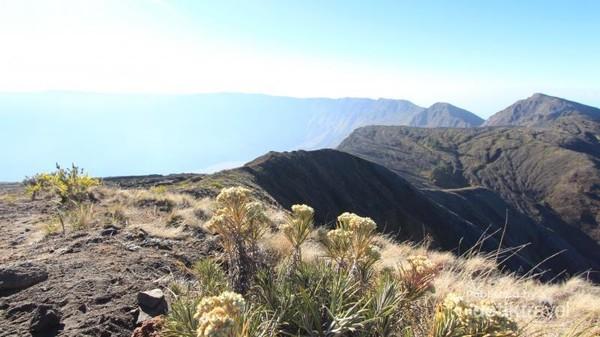 Bunga Edelweiss berlatar kawah Gunung Tambora