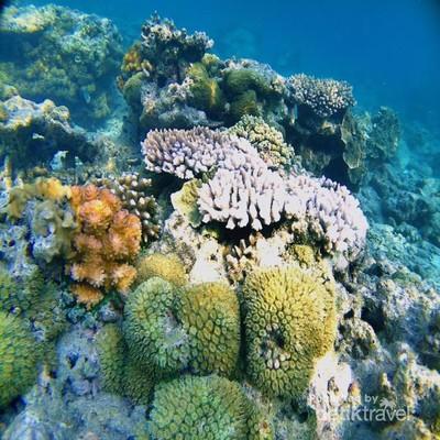 Kecantikan Bawah Laut Pulau Tunda