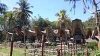 Desa Kete Kesu dikelilingi oleh padang rumput dan padi. Sungguh indah.