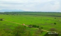 Padang Savana kalo sedang hijau bagus juga ya