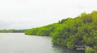 Begini pemandangan dari dermaga mangrove Pantai Bama, adem banget deh