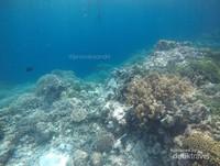 Alam bawah lautnya Pantai Sombu