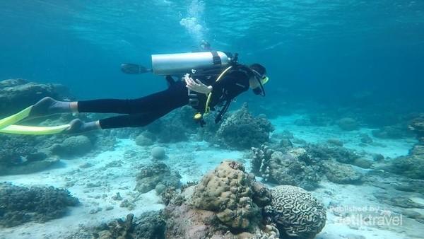 Euodia lagi menjajal diving juga. Gak mau kalah dengan Saya, Euodia juga semakin mahir dalam diving pertamanya. Itu adalah pengalaman baru buat kita berdua!