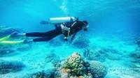 Scuba Diving di laut Wakatobi