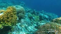 Kecantikan Bawah Laut Wakatobi