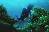 Pertama kali mengunjungi bawah laut Wakatobi