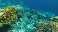 Bawah laut spot diving bernama Colosseum, Wakatobi