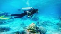 Melakukan scuba diving pertama kali di Wakatobi
