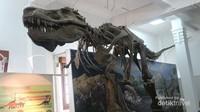 Tidak cuma di film, traveler bisa melihat langsung fosil T-Rex di museum ini