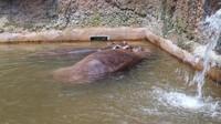 Di sini terdapat aneka hewan yang menarik, salah satunya adalah kuda nil