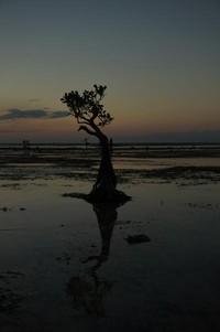 Yang menjadi ciri khas pantai ini adalah banyaknya pohon bakau yang terletak di bibir pantai