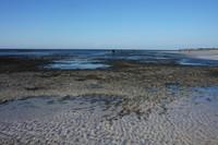 Pantai yang surut